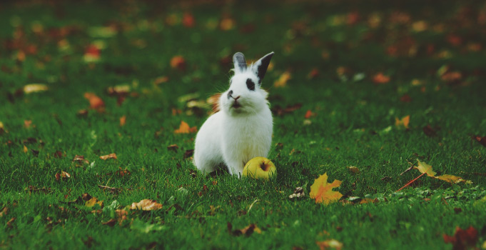 black and white rabbit sitting in grass and leaves